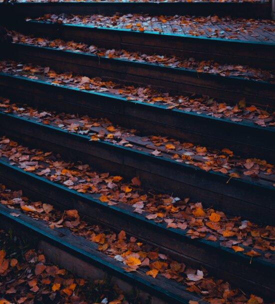 tre, trapper, våte, høst, blader, tørr, utendørs, mønster, natur, tekstur
