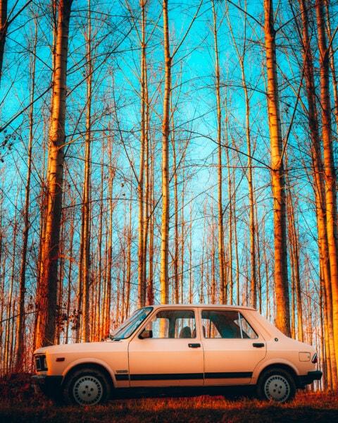 Zastava 101, auto, Srbija, Yugo nostalgija, starinski, staro, limuzina, stabla, šuma, drvo