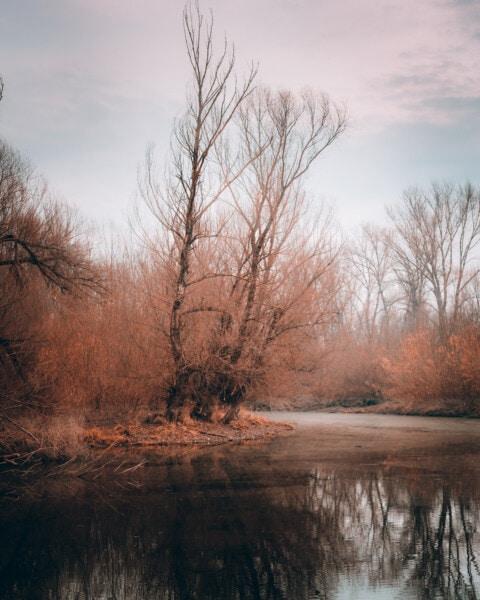 sump, efterårssæsonen, vand system, træer, skov, vådområde, daggry, landskab, træ, tåge