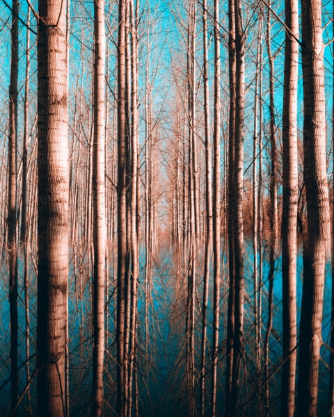 poplar, forest, floodplain, landscape, water system, water, tree, wood, nature, dawn