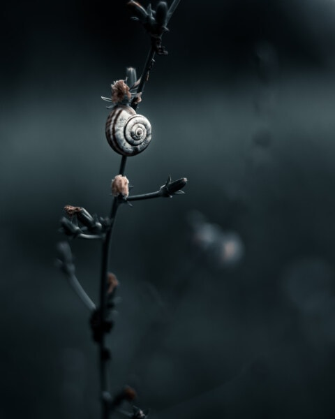 escargot, monochrome, nature, jardin, feuille, fleur, animal, sombre, faune, plante