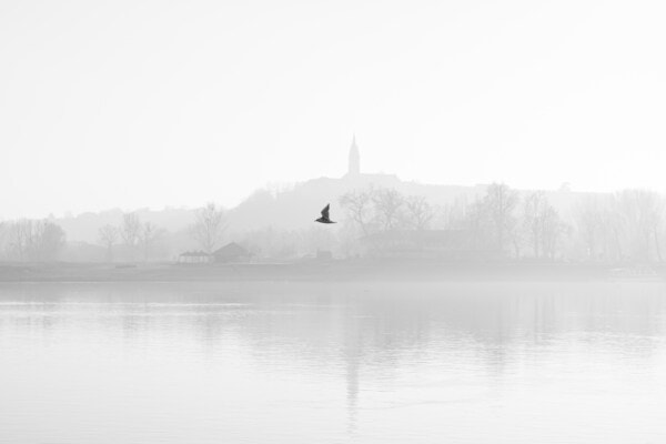 bird, flying, black and white, fog, river, lake, reflection, monochrome, nature, mist