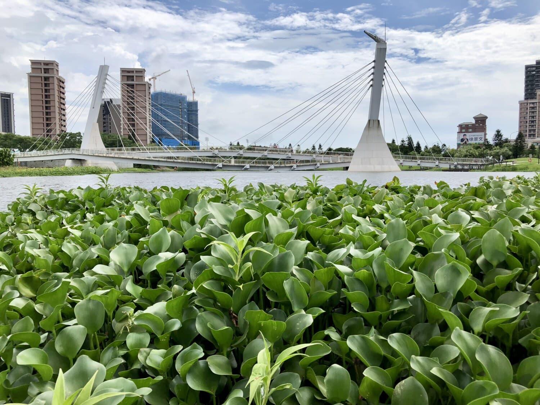 suspension bridge, bridge, Asia, cityscape, aquatic, leaf, flora, nature, garden, outdoors