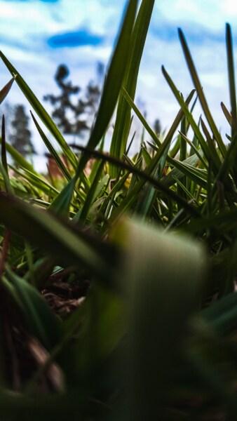 緑の草, 草, 間近, 工場, 葉, ぼかし, ランドス ケープ, 光, ガーデン, 自然