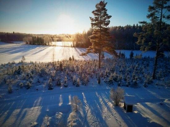 雪, 山, 冬天, 阳光, 阳光, 雪, 林路径, 国家公园, 景观, 森林