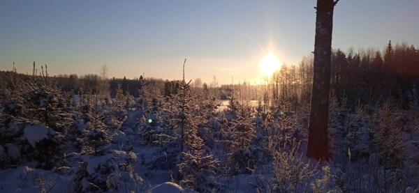 winter, sunset, sunlight, sunrays, shadow, forest, sunspot, conifer, frost, snow