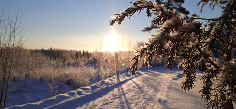 schneebedeckt, Koniferen, Geäst, Winter, Waldweg, Forststraße, Schneeflocke, Sonnenaufgang, Sonnenstrahlen, eisig