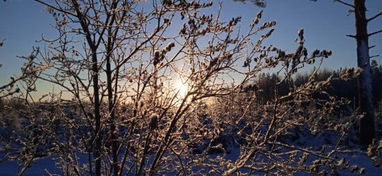 sunrise, winter, shadow, silhouette, sunrays, branches, branch, tree, bat, nature