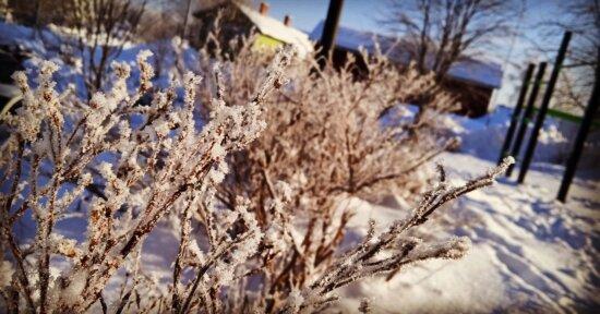 霜, 分支机构, 冷, 枝条, 冬天, 雪, 性质, 树, 分支, 户外活动