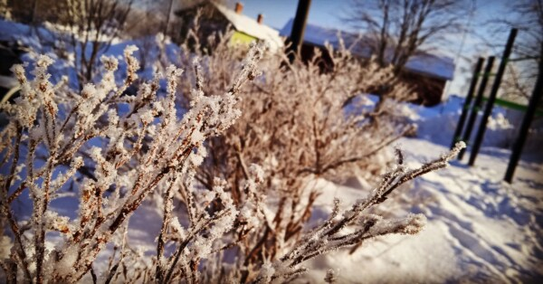 frost, branches, cold, branchlet, winter, snow, nature, tree, branch, outdoors