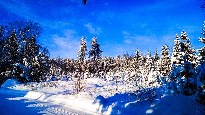 ciel bleu, bleu foncé, forêt, neige, route forestière, Hiver, nature sauvage, flanc de la montagne, conifères, pente