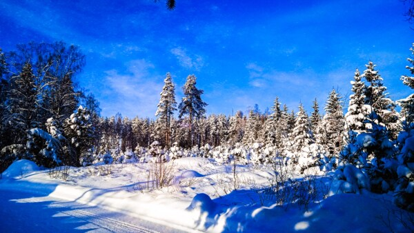 blue sky, dark blue, forest, snow, forest road, winter, wilderness, mountainside, conifers, slope
