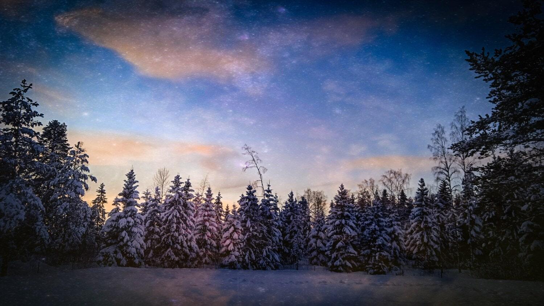 Hiver, forêt, soirée, neigeux, ciel bleu, nature sauvage, conifères, arbre, neige, paysage