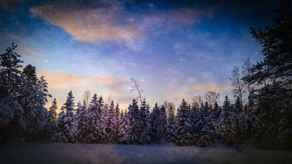 winter, forest, evening, snowy, blue sky, wilderness, conifers, tree, snow, landscape
