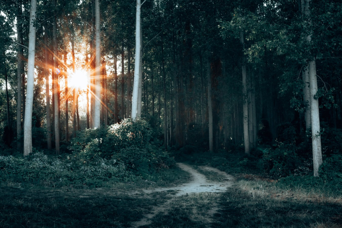 sunset, sun, sunrays, mystery, forest road, forest, landscape, park, tree, trees