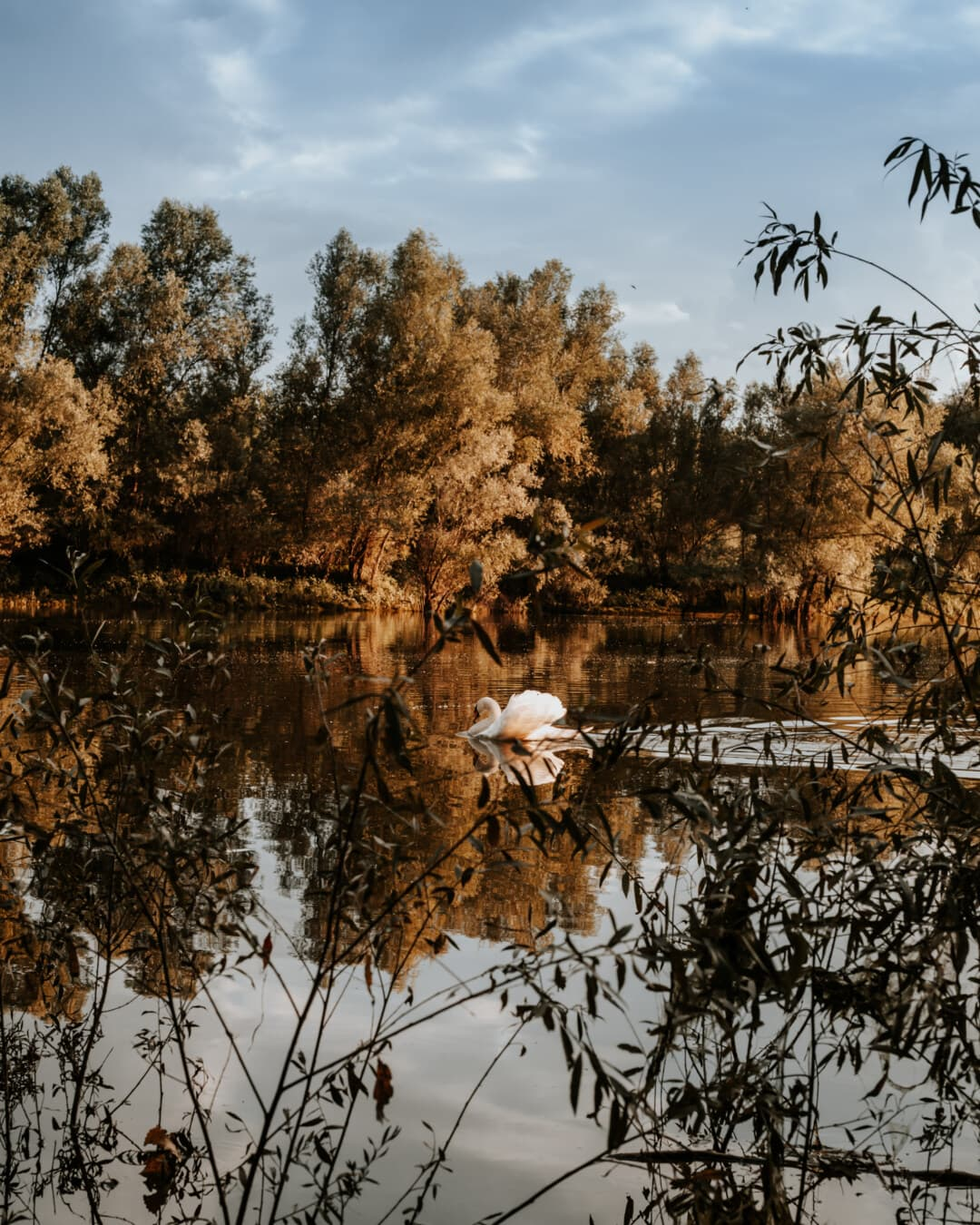 weiß, Schwan, Schwimmen, allein, am See, Reflexion, Wasser, Struktur, Natur, Bäume