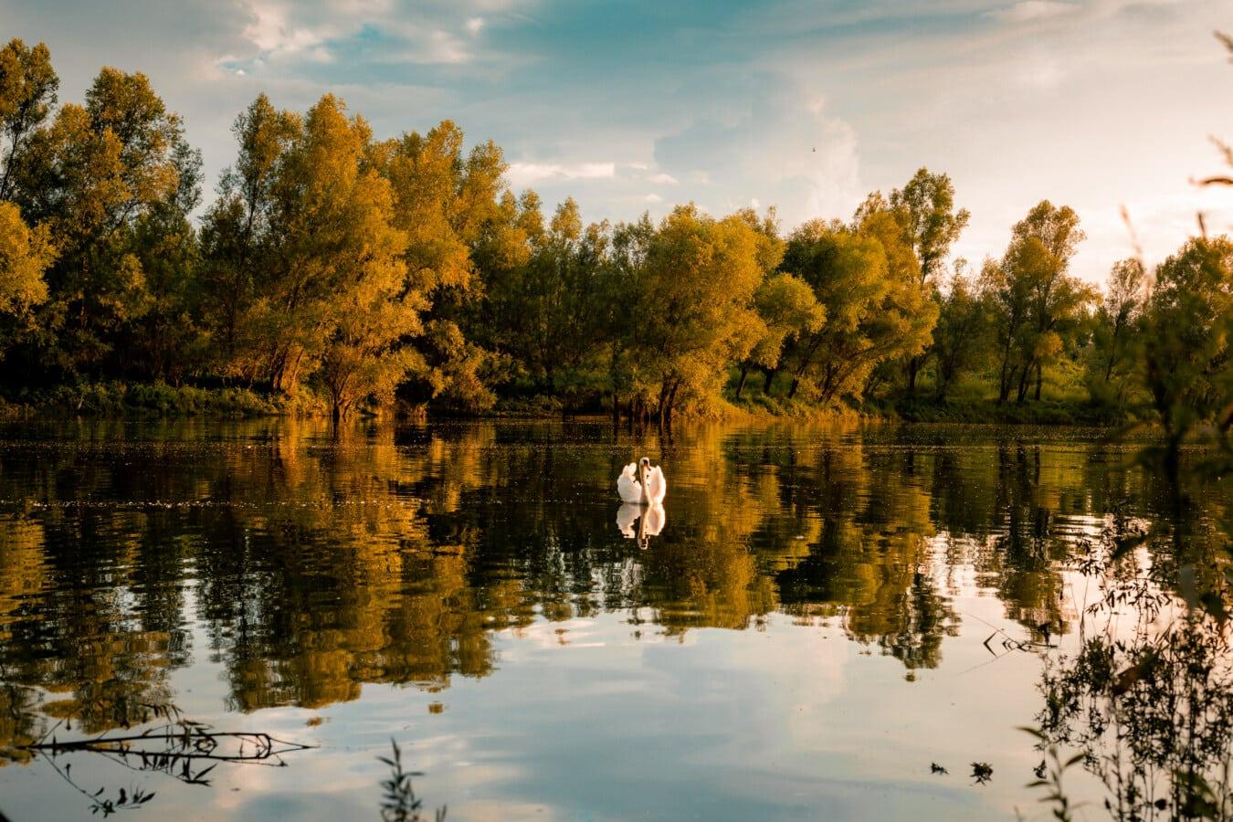 Herbst, See, Reflexion, Sumpf, Schwimmbad, Bäume, Wald, Struktur, Wasser, Landschaft