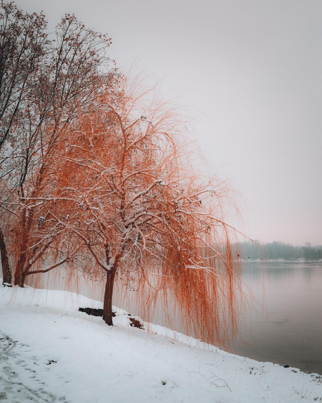 berge, neige, arbre, brumeux, matin, gel, brouillard, arbres, Hiver, saison