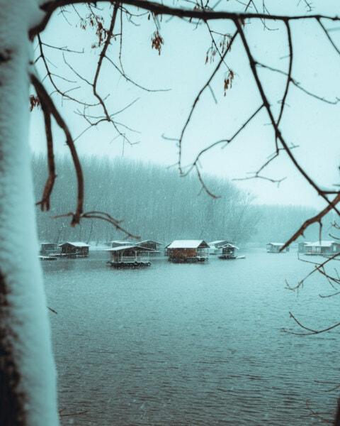 flocons de neige, tempête de neige, remise à bateaux, au bord du lac, glacial, eau froide, arbre, neige, Hiver, eau
