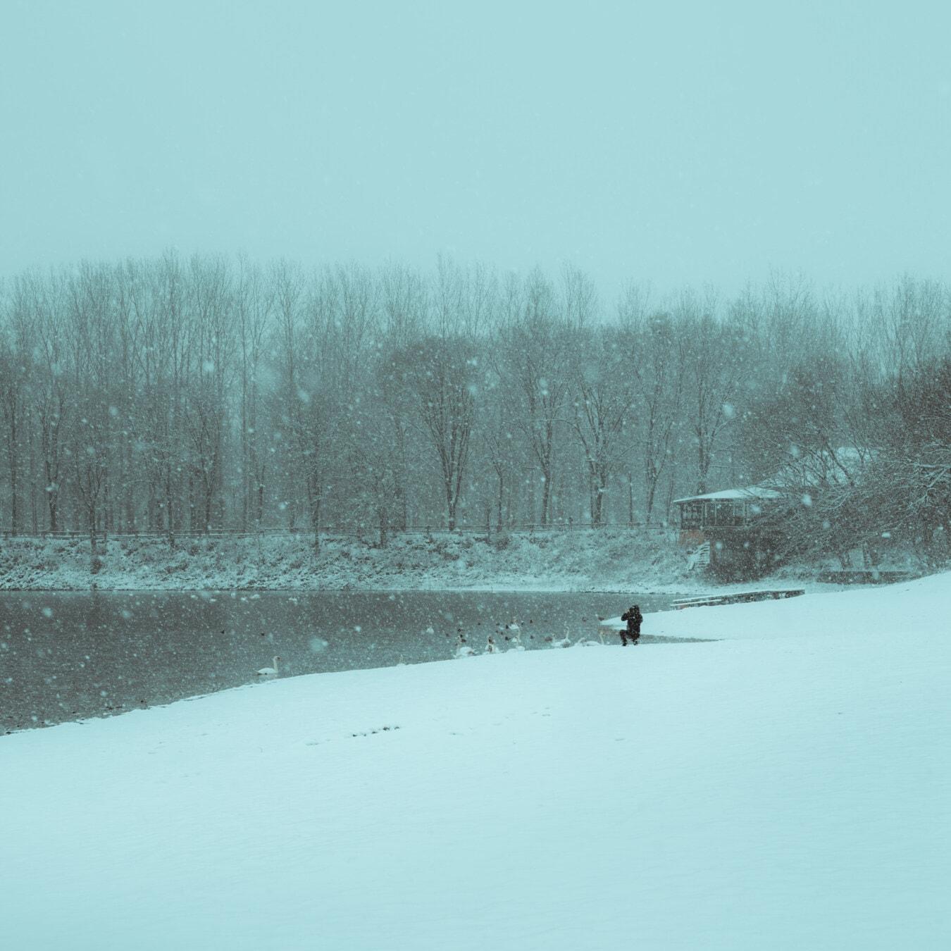 Schneesturm, Fluss, Flussufer, Schneeflocken, Vögel, Herde, Schnee, Wald, Nebel, Holz