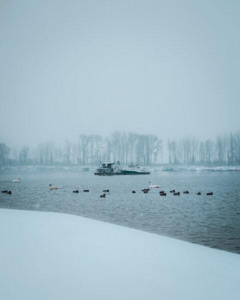 canards, Lac, eau froide, cygne, troupeau, Hiver, bateau de pêche, mauvais temps, brumeux, paysage