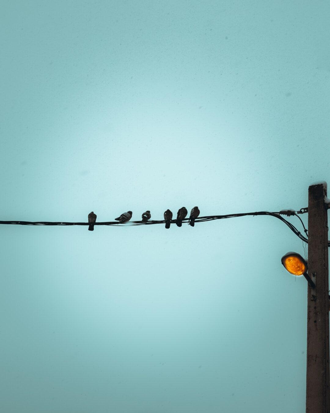 sauvage, Pigeon, ligne téléphonique, poteau de téléphone, fil de téléphone, soirée, Hiver, ampoule, câble, électricité