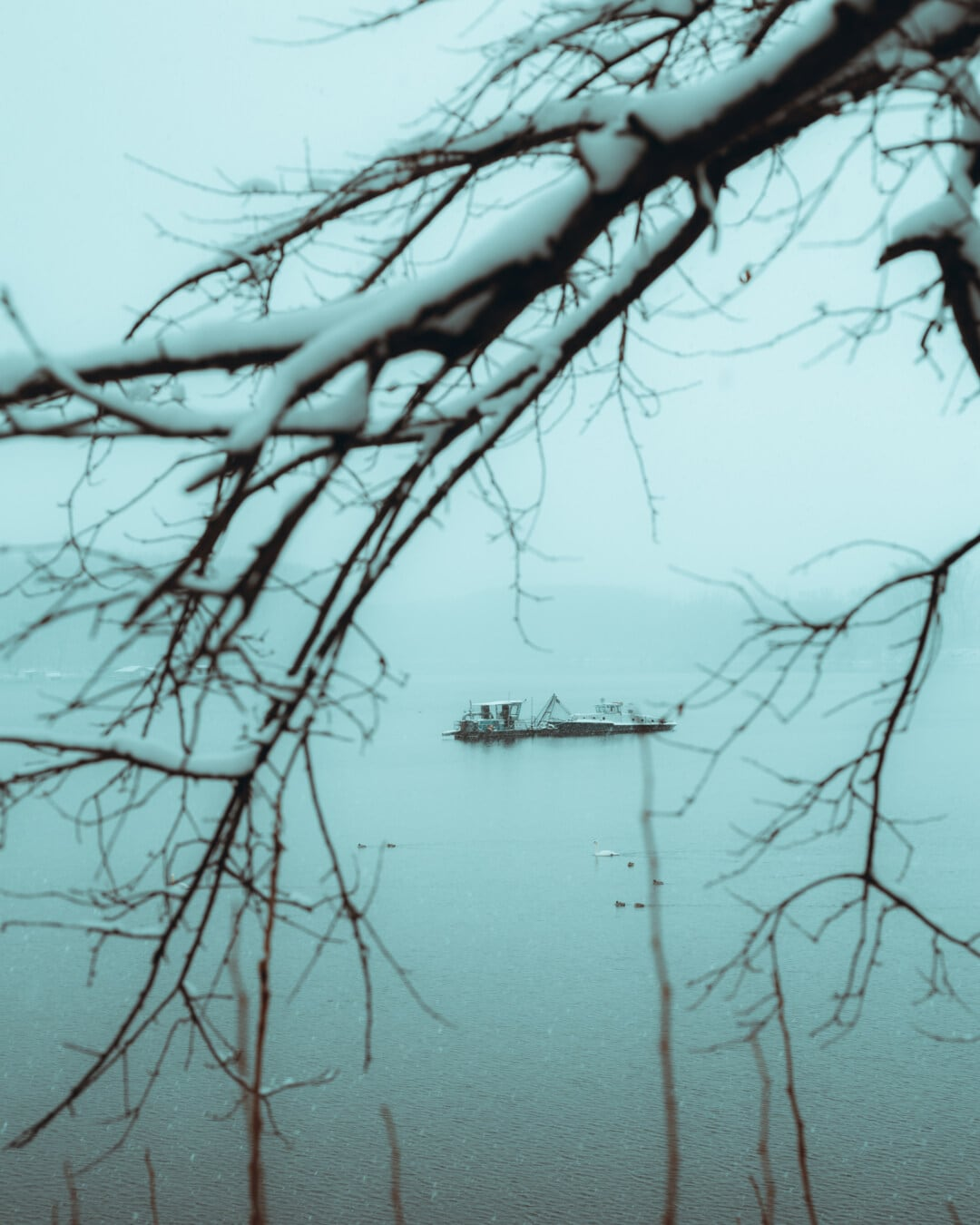 lake, fishing boat, winter, snowy, branches, fog, frosty, nature, tree, snow