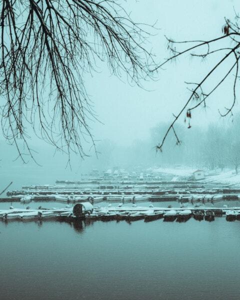fog, winter, water, lake, tree, nature, snow, mist, reflection, dawn