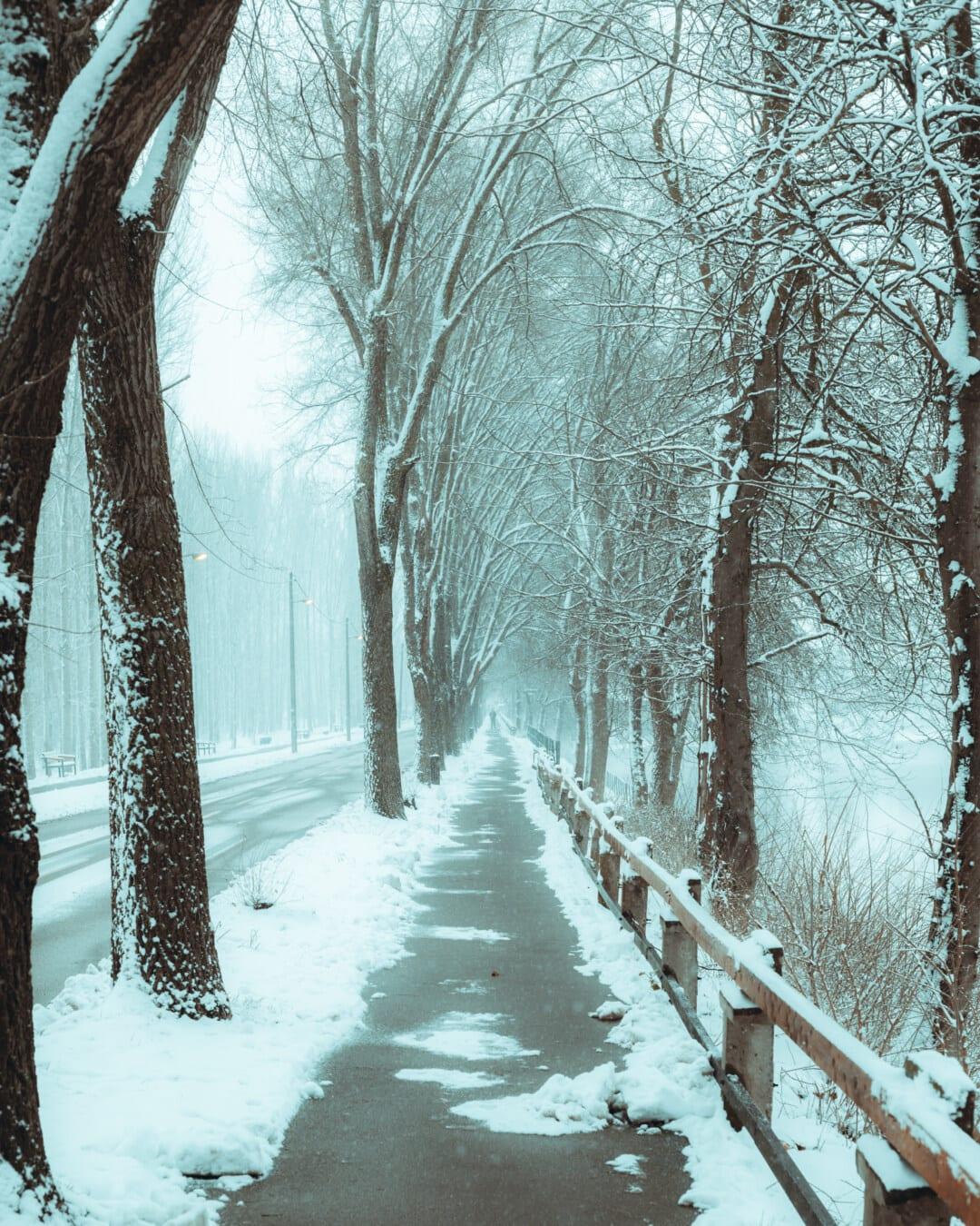 Hiver, route forestière, asphalte, vide, Itinéraire, gel, froide, ruelle, neigeux, gel