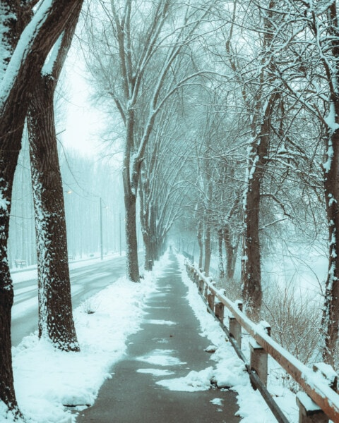 winter, forest road, asphalt, empty, road, frost, cold, alley, snowy, freeze