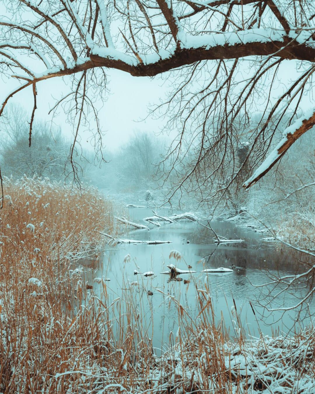 Sumpf, Winter, Feuchtgebiet, schneebedeckt, Kälte, Schnee, Wald, Landschaft, Frost, Holz