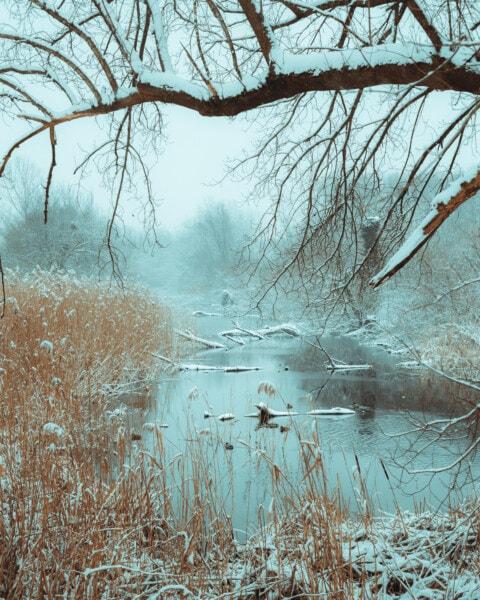 marais, Hiver, zones humides, neigeux, froide, neige, forêt, paysage, gel, bois