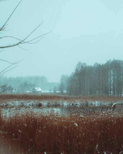 swamp, wetland, snowy, foggy, winter, atmosphere, tree, landscape, mist, weather