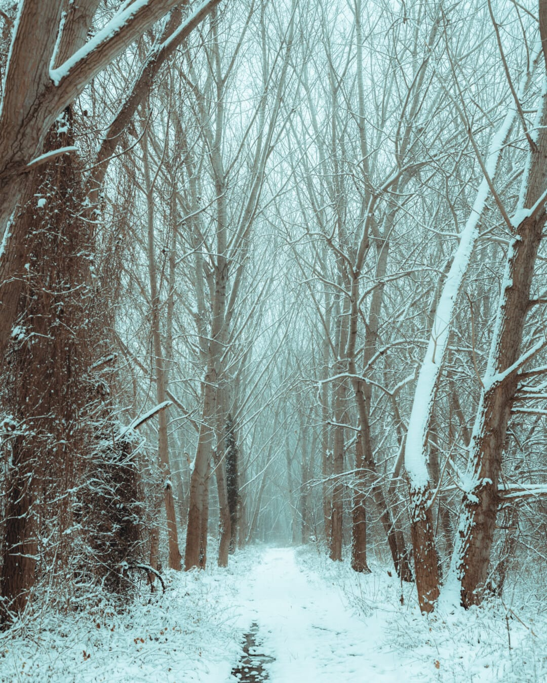forest trail, winter, trees, cold, frost, snow, dawn, fog, wood, forest