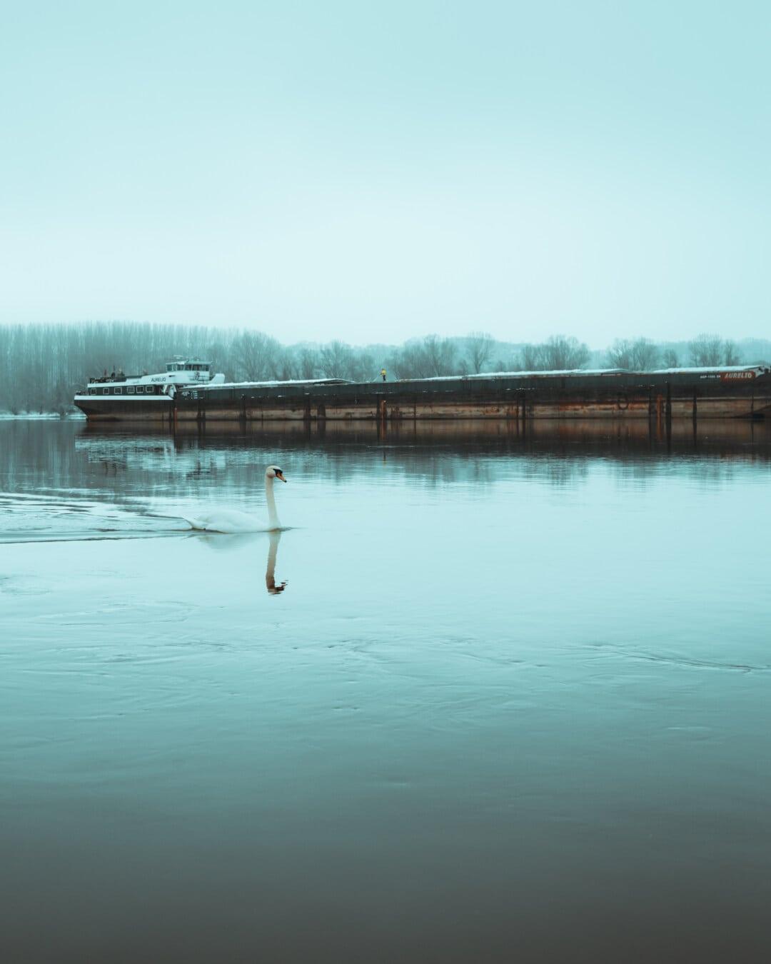 cargo ship, barge, river, ice water, winter, bird, swan, lake, water, nature