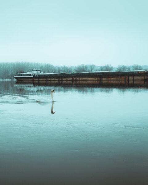 Frachtschiff, Lastkahn, Fluss, Eiswasser, Winter, Vogel, Schwan, See, Wasser, Natur