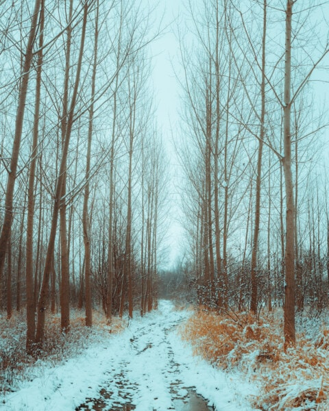 forest path, winter, forest road, trees, poplar, snow, bad weather, frost, cold, wood
