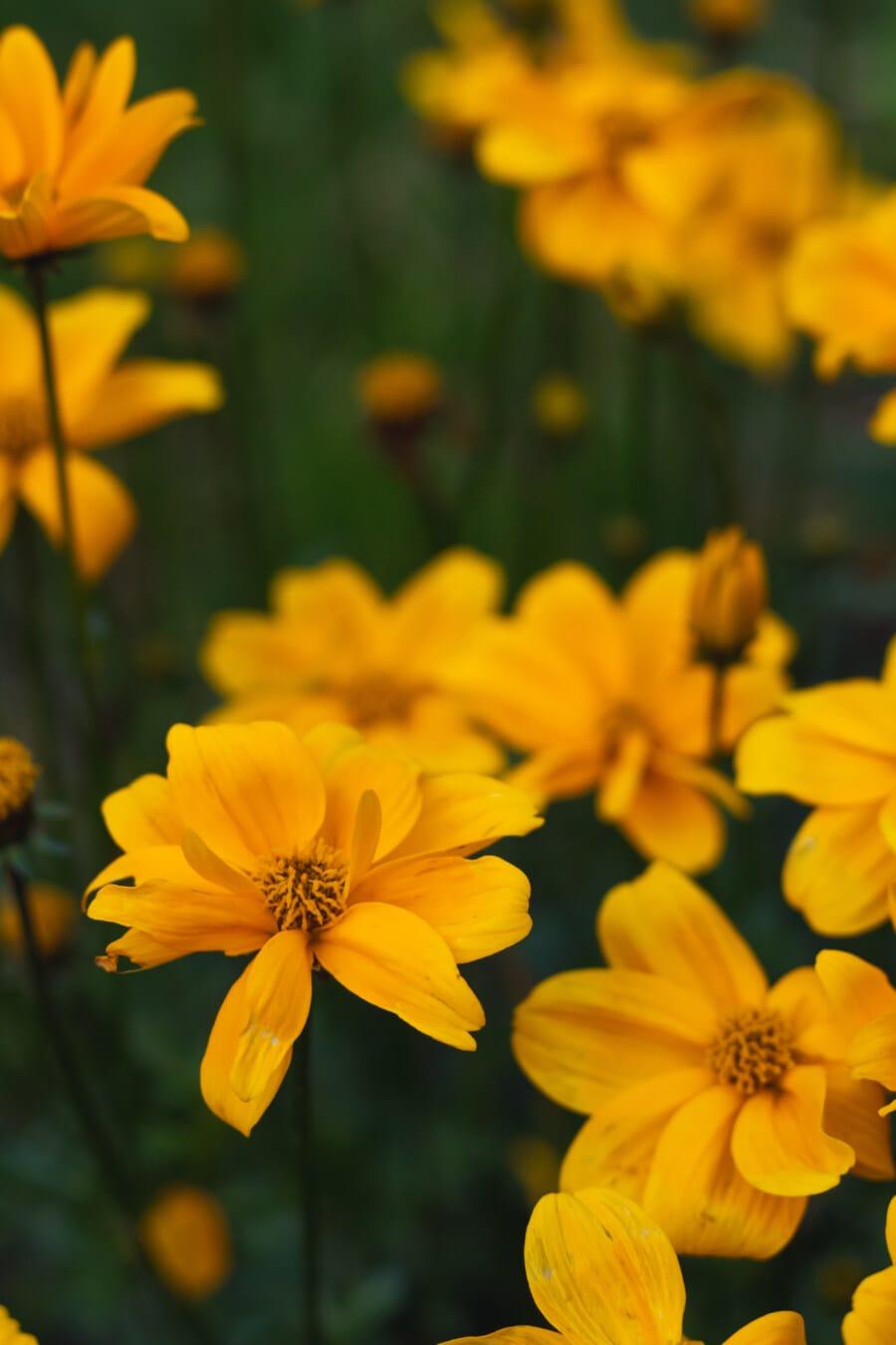 flower garden, yellowish brown, flowers, orange yellow, pistil, flower, spring, plant, flora, blossom