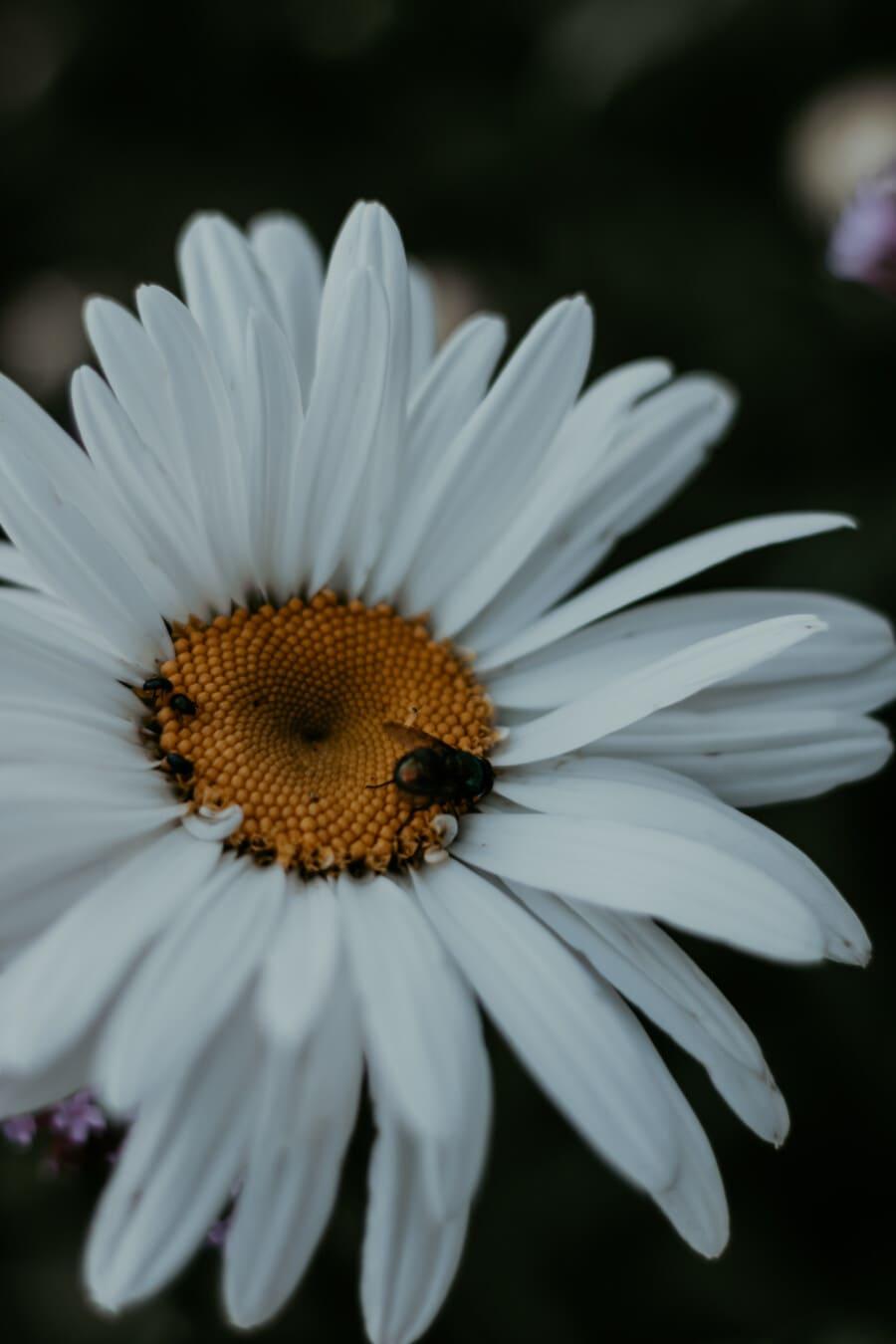 pollen, pistil, white flower, close-up, insect, flower, spring, garden, nature, plant
