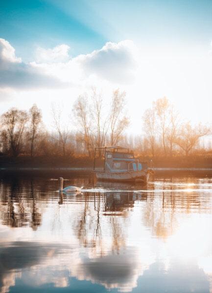 sunshine, bird, swan, sunny, sunrise, boat, calm, lake, water, majestic