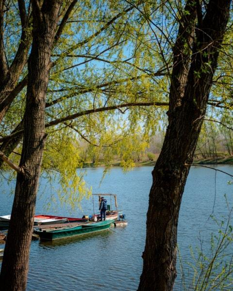 bateau de rivière, rivière, berge, branchette, bateaux, canal, pêcheur, personne, eau, arbre