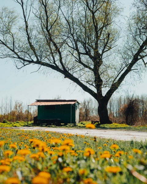shed, rural, abandoned, old, forest path, summer time, forest road, road, barn, tree
