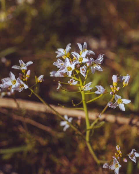 wildflower, meadow, grassy, stem, petal, nature, blossom, garden, flora, flower
