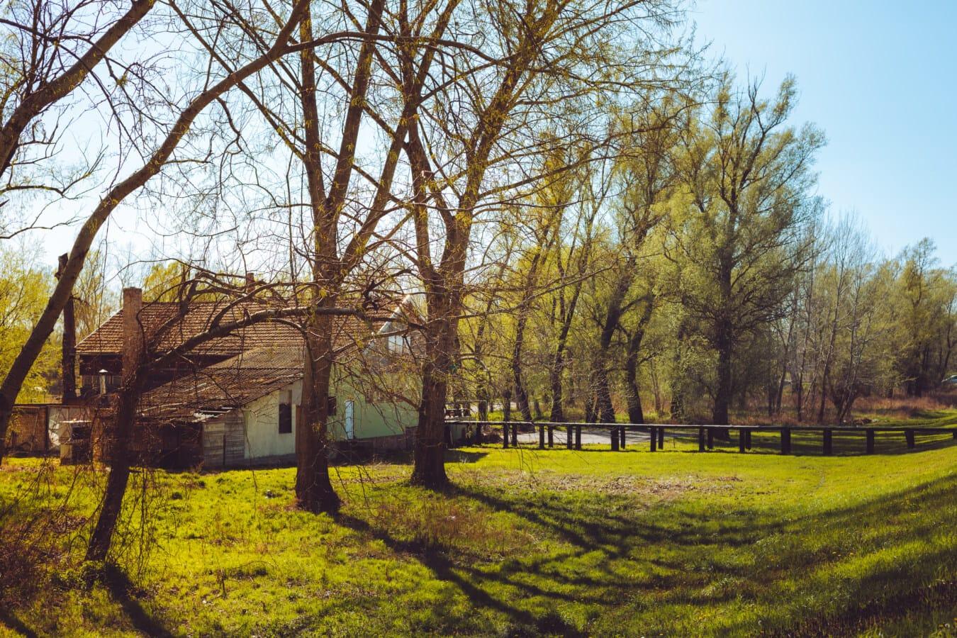 maison, Parc national, ombre, lumière du soleil, tremble, herbe, arbres, arbre, paysage, forêt