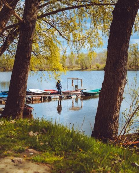 au bord du lac, pêche, pêcheur, printemps, jetée, arbre, paysage, Lac, arbres, eau