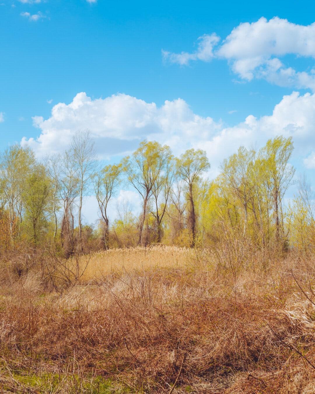 forêt, l'été, saison sèche, arbuste, buissons, herbe, paysage, campagne, prairie, nature