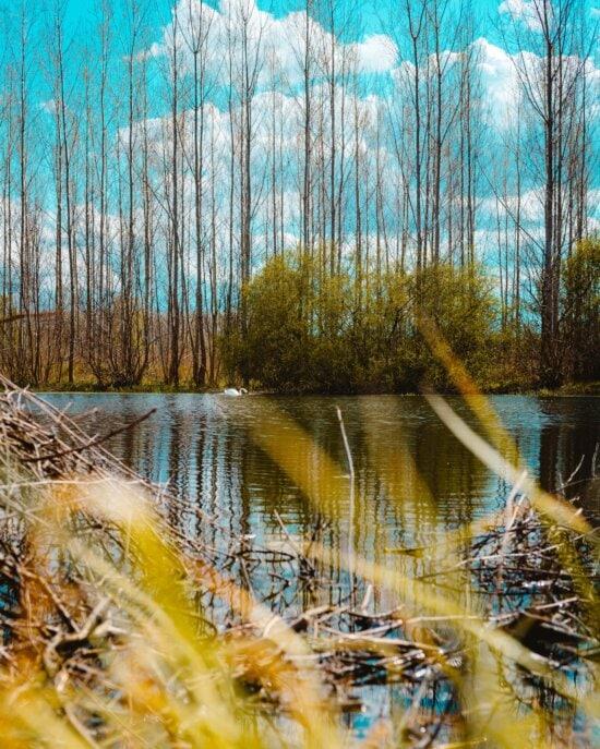 Lac, marais, forêt, contre les inondations, verdure, peuplier, eau, bois, paysage, zones humides