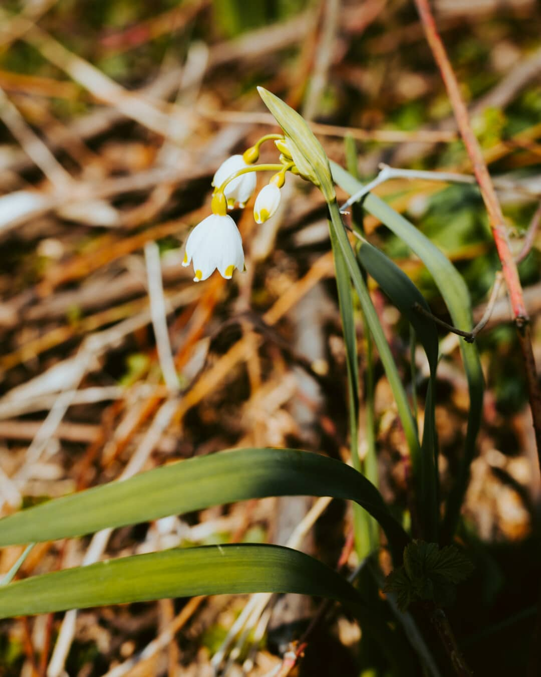 white flower, spring time, flower, leaf, plant, nature, outdoors, flora, grass, fair weather