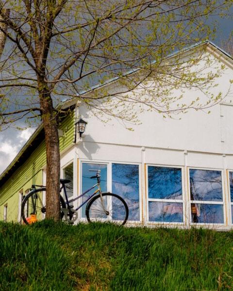 自行车, 树, 家庭, 后院, 住宅, 房子, 回家, 体系结构, 家庭, 窗口
