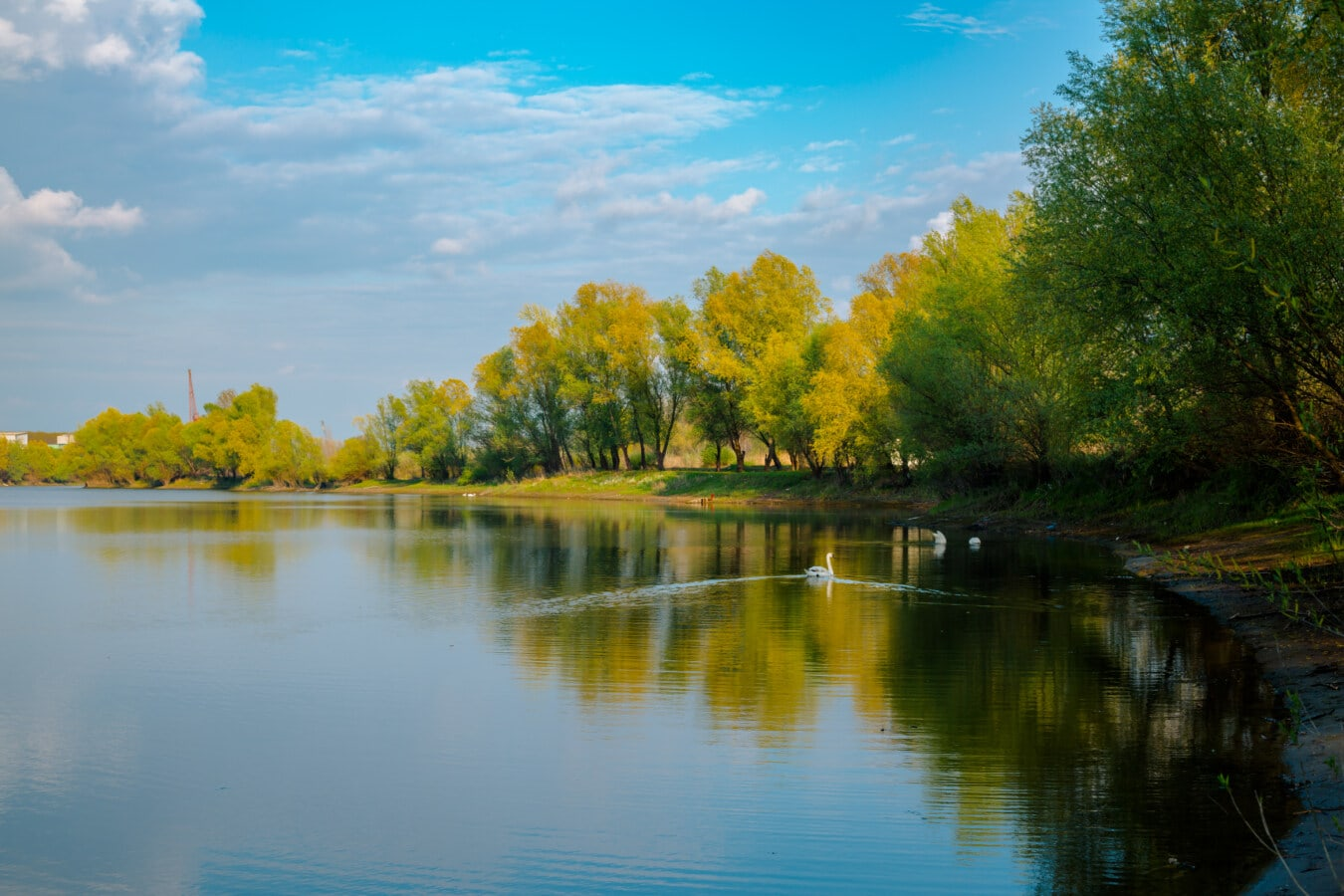 nature, lake, lakeside, landscape, swan, summer time, majestic, blue sky, national park, idyllic